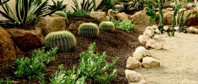 5_cactusgarden